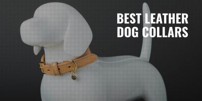 7 Best Leather Dog Collars