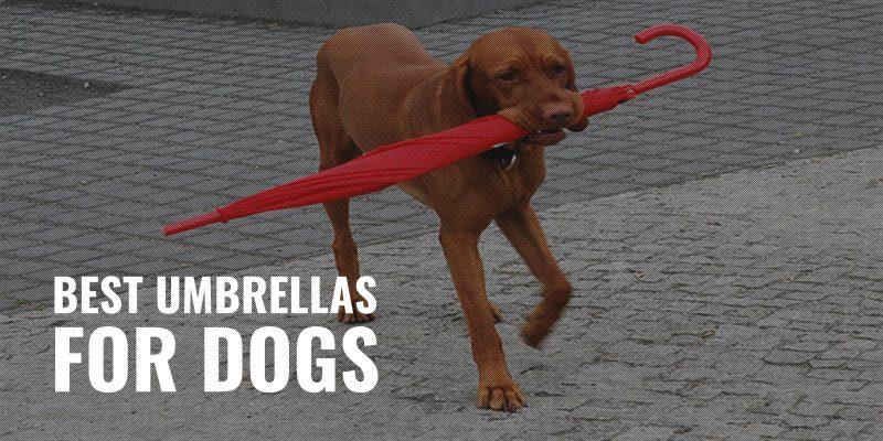 best umbrellas for dogs