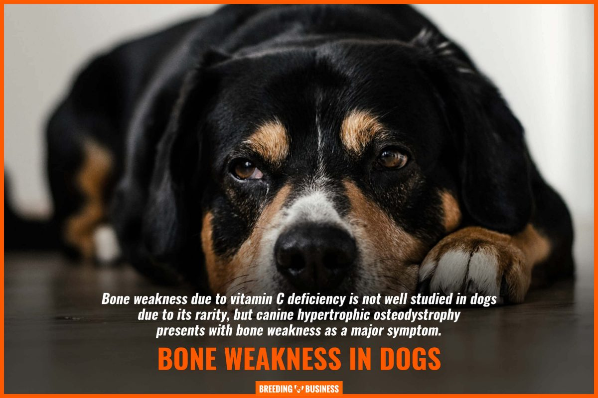 bone weakness in dogs