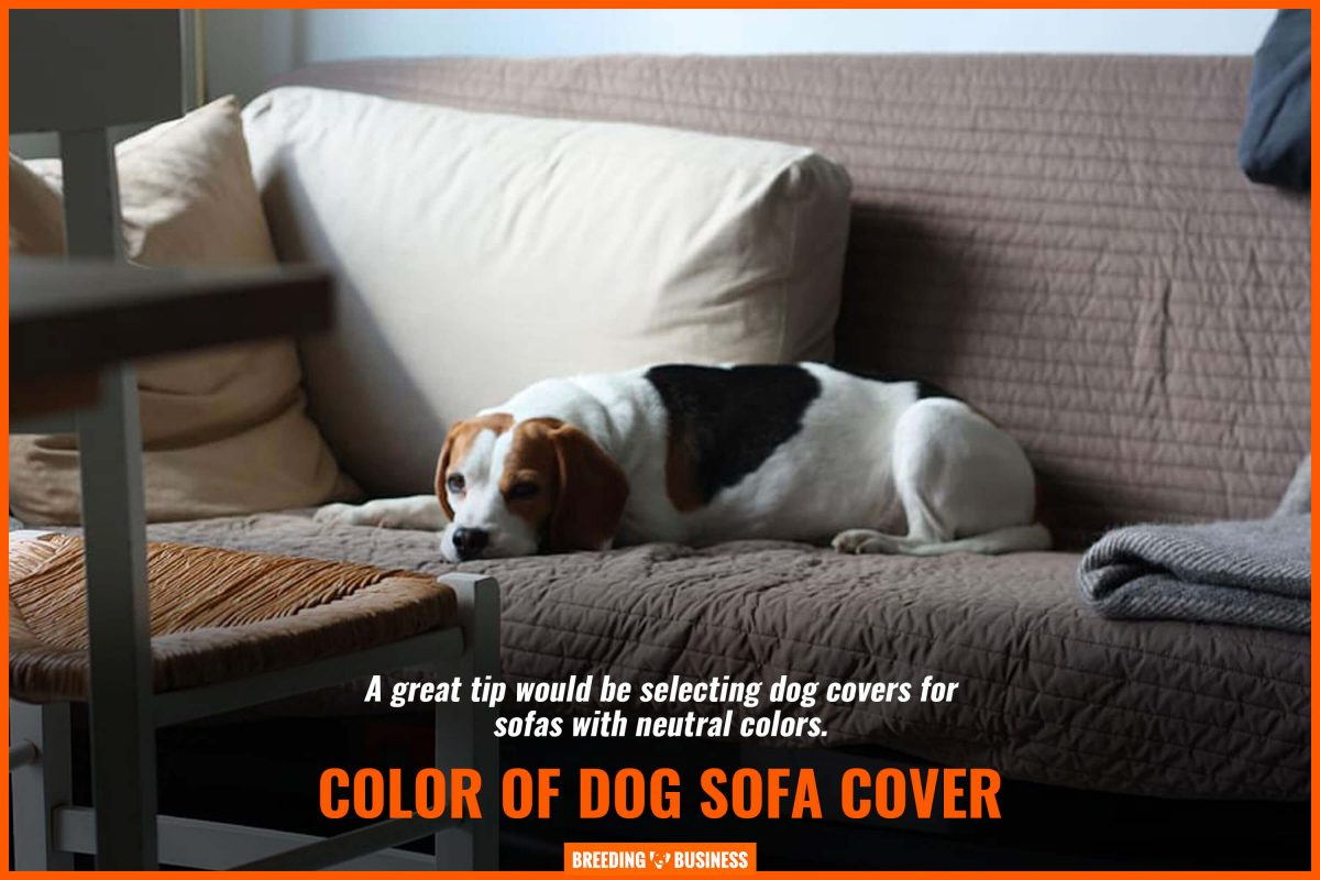 color of dog sofa cover