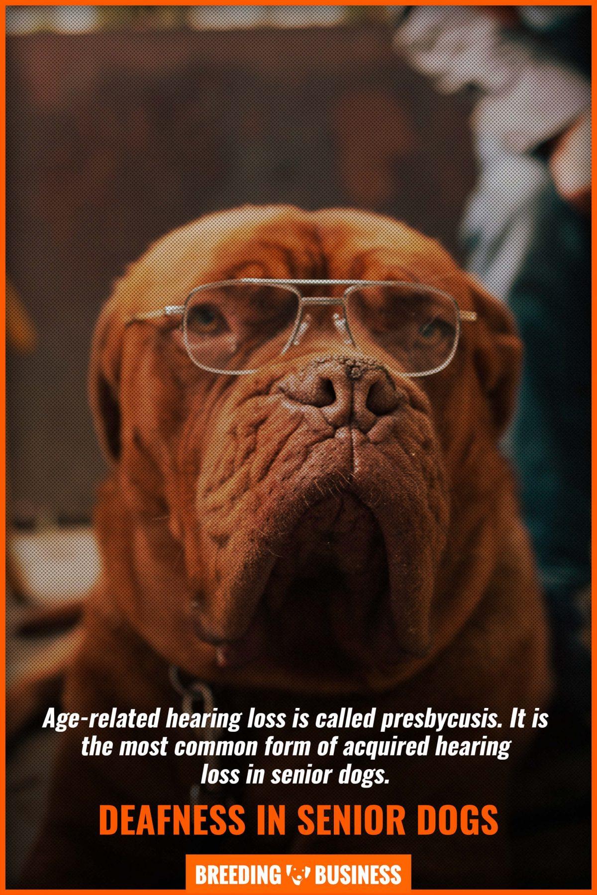 deafness in senior dogs