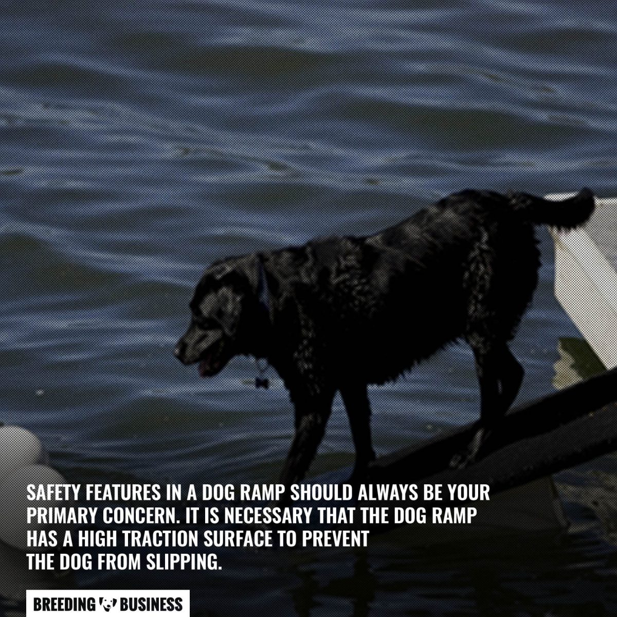 dog boat ramp safety