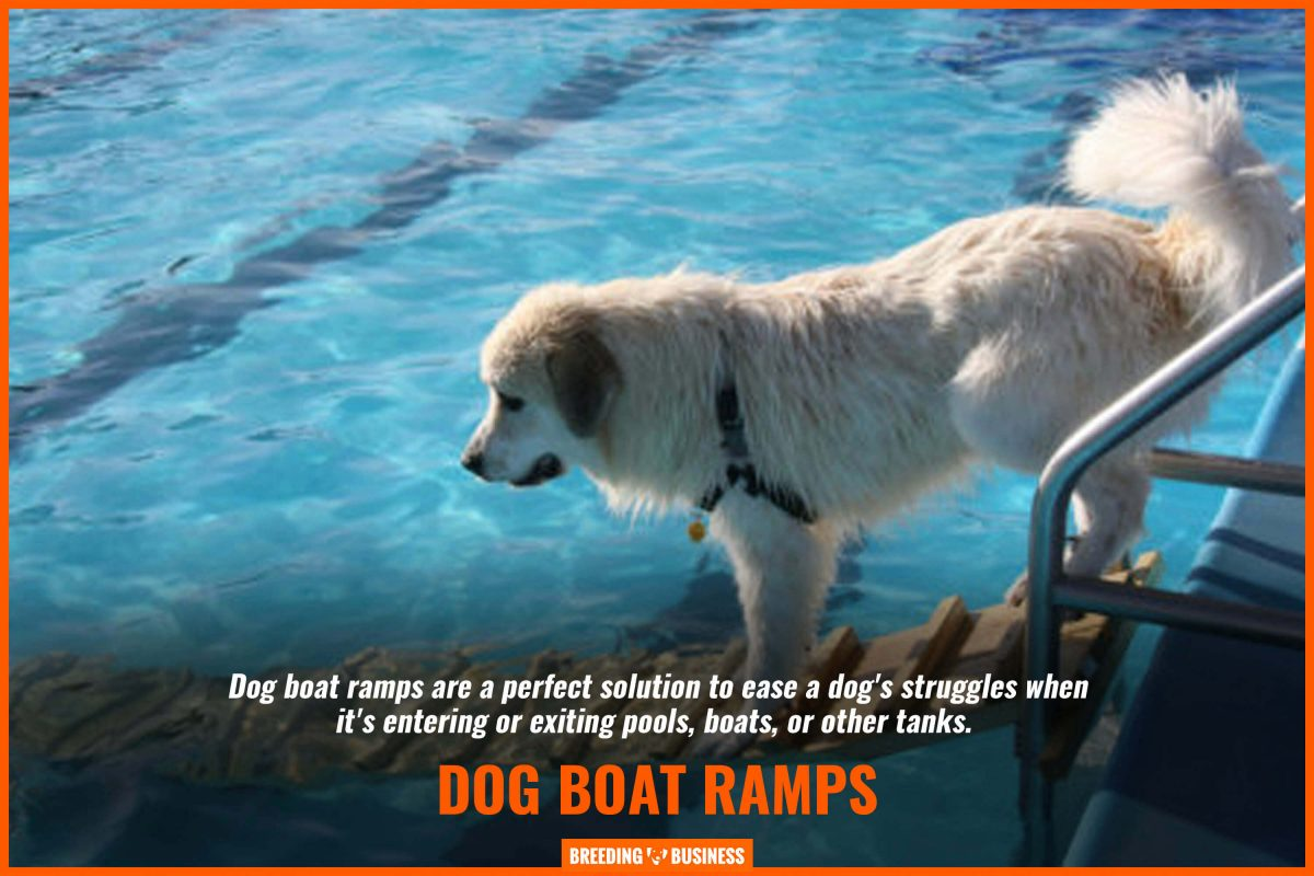 dog boat ramps