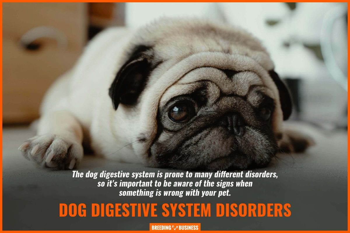 dog digestive system disorders