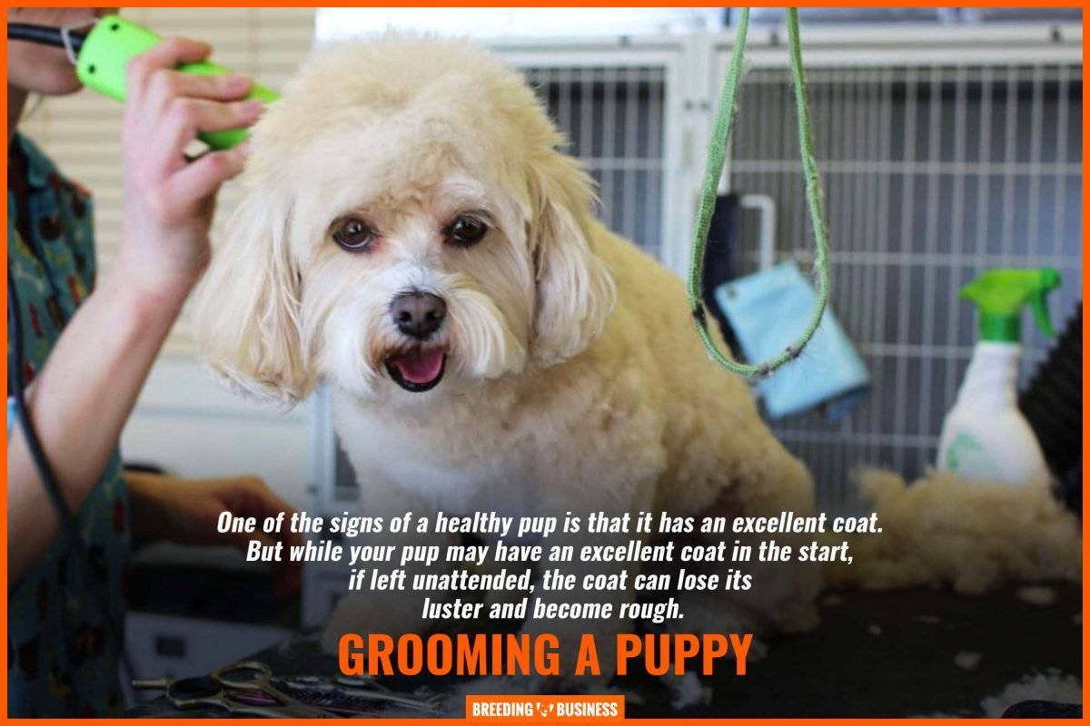 grooming a puppy
