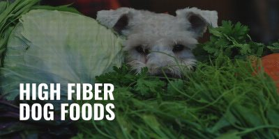 high fiber dog foods
