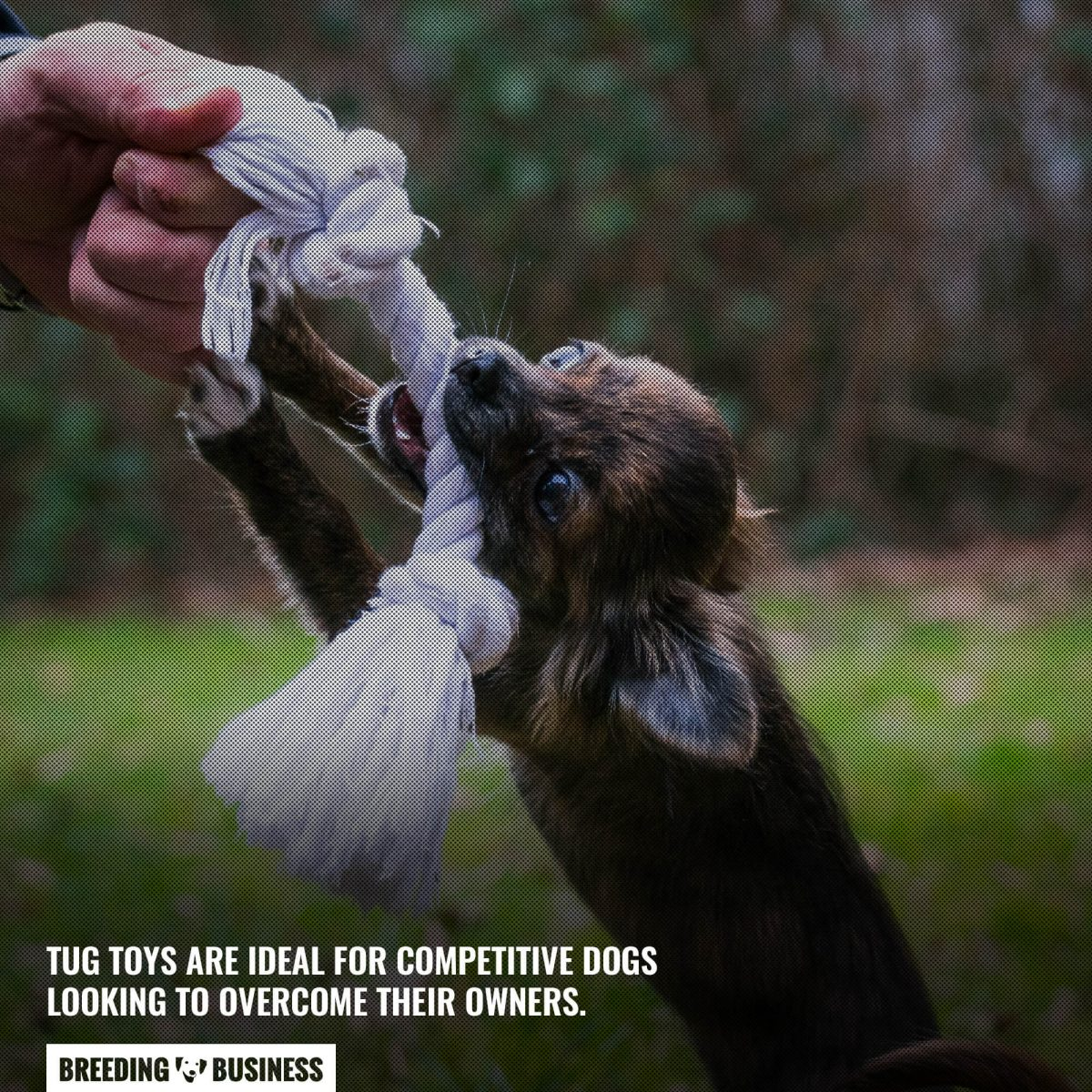 indestructible tug toys for dogs