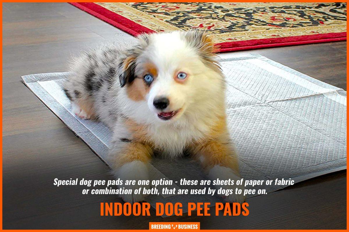 indoor dog pee pads