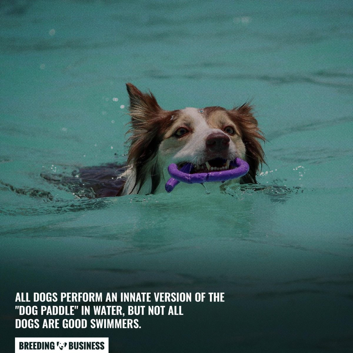 innate dog paddle