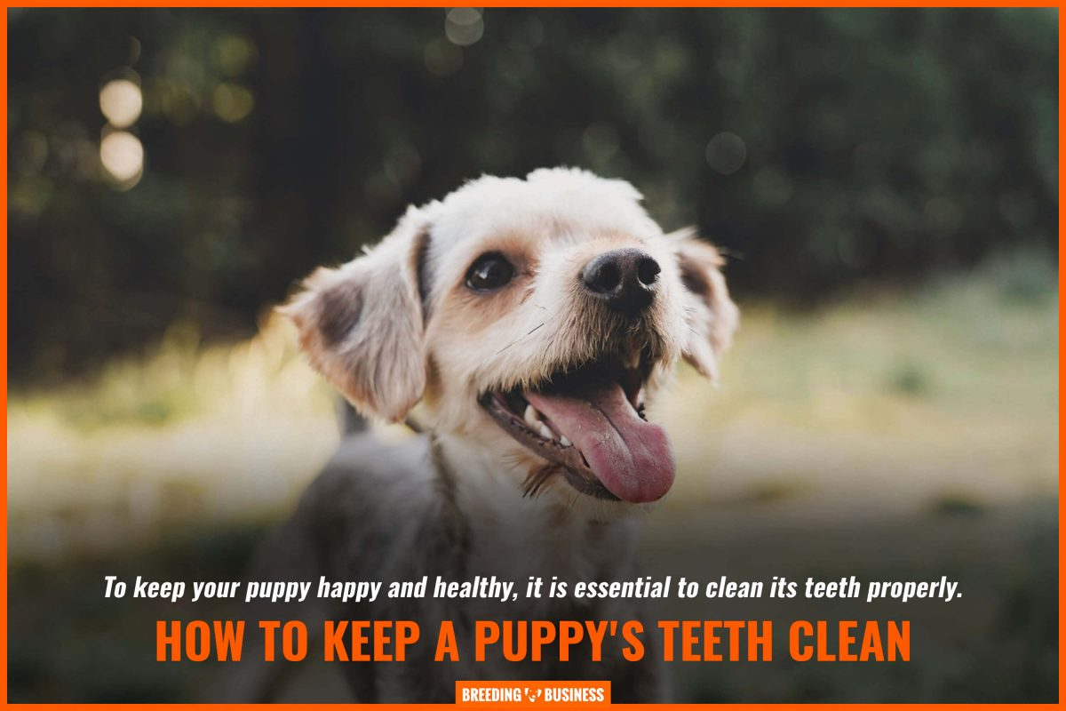 keep puppies happy and healthy
