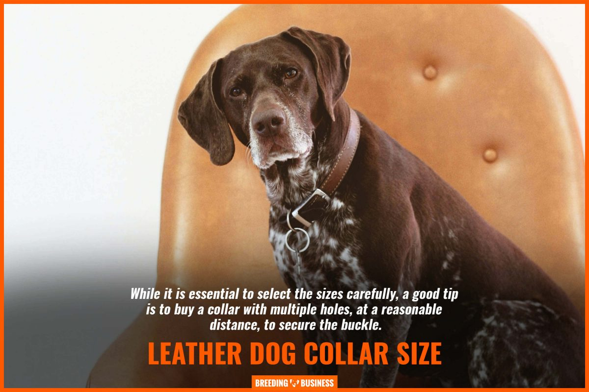 leather dog collar size