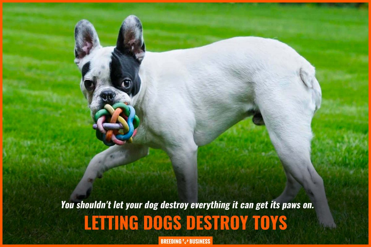 letting dogs destroy toys