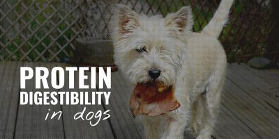 protein digestibility in dogs