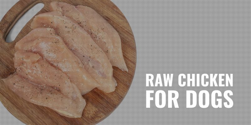 raw chicken for dogs