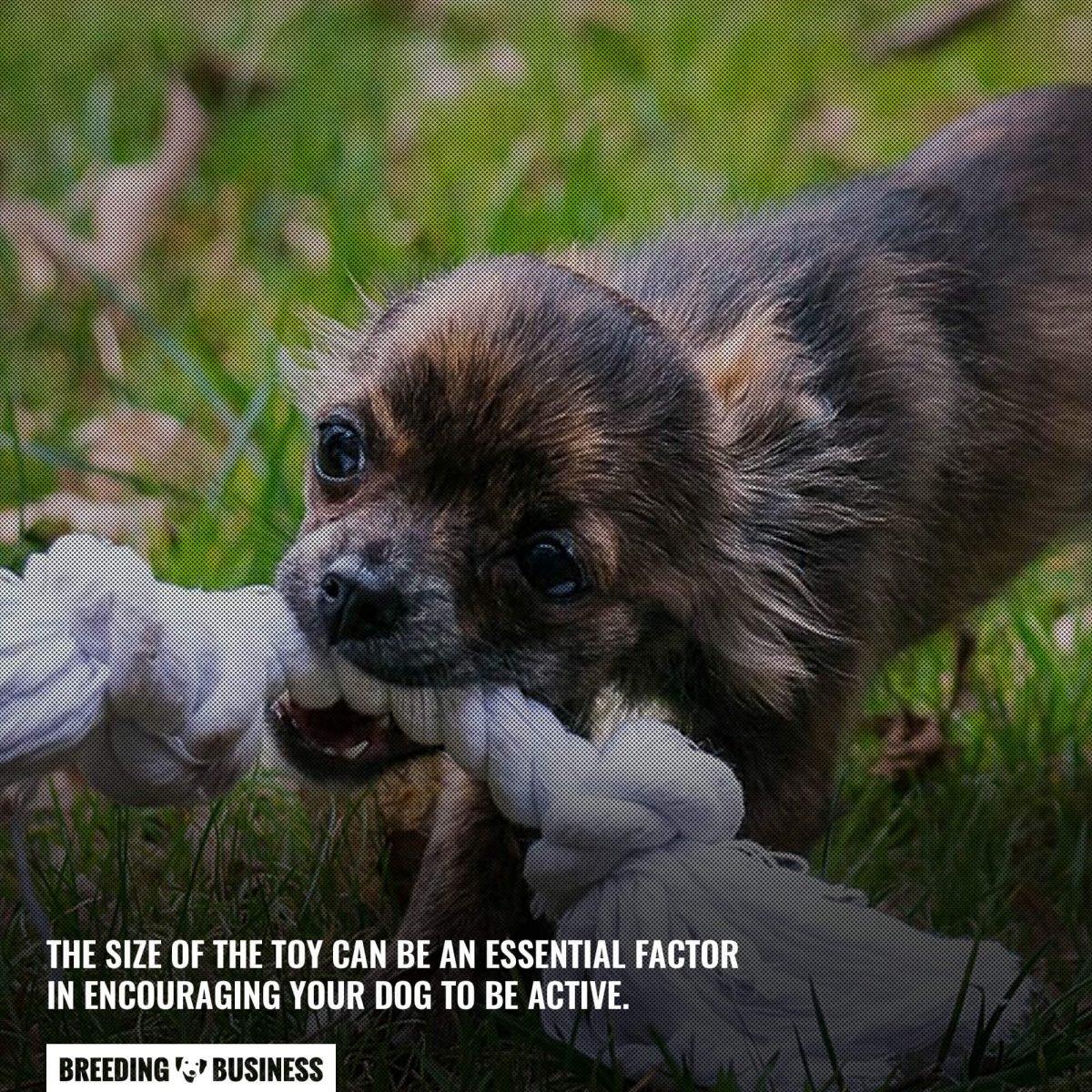 size of indestructible dog toy