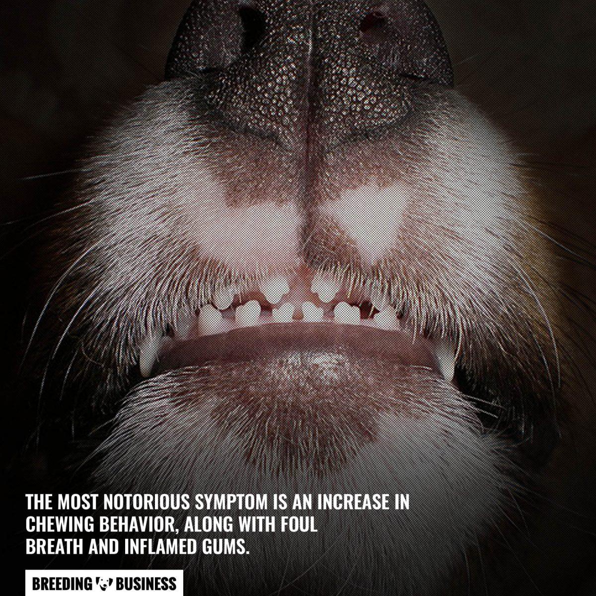 symptoms of teething in puppies