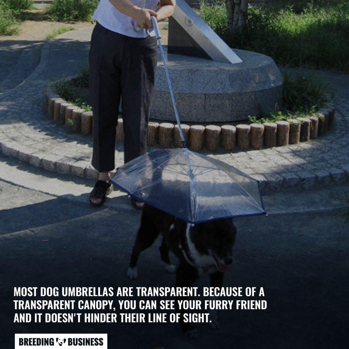 transparent dog umbrellas