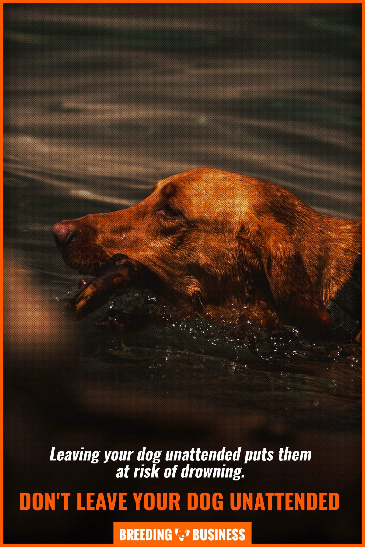 unattended swimming dog
