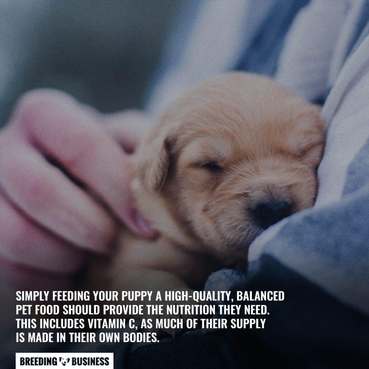 vitamin c for puppies