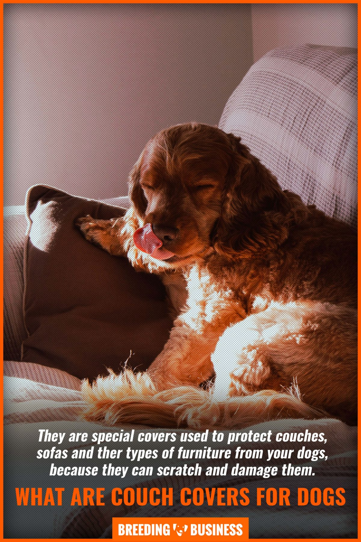 what are couch covers for dogs