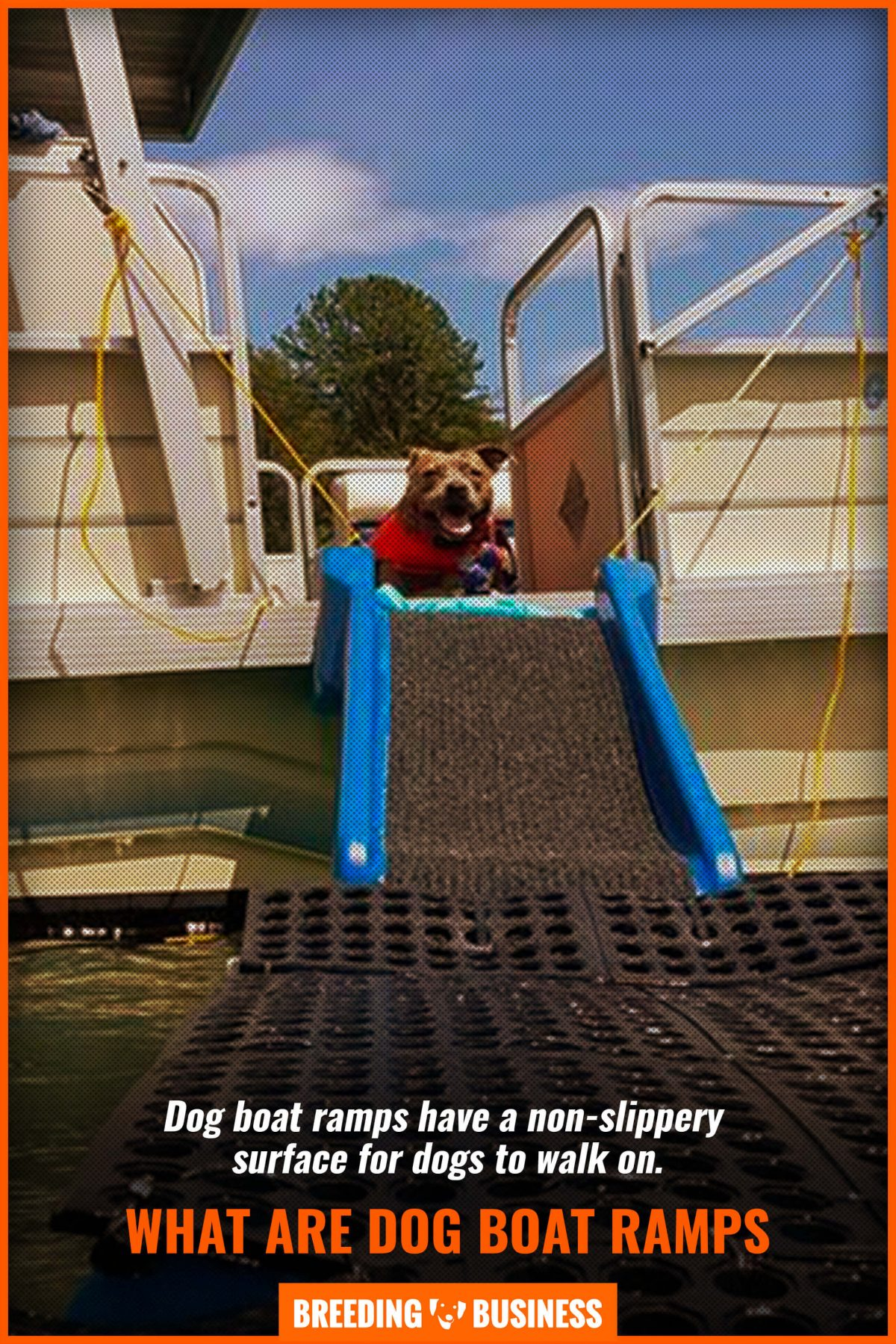 what are dog boat ramps