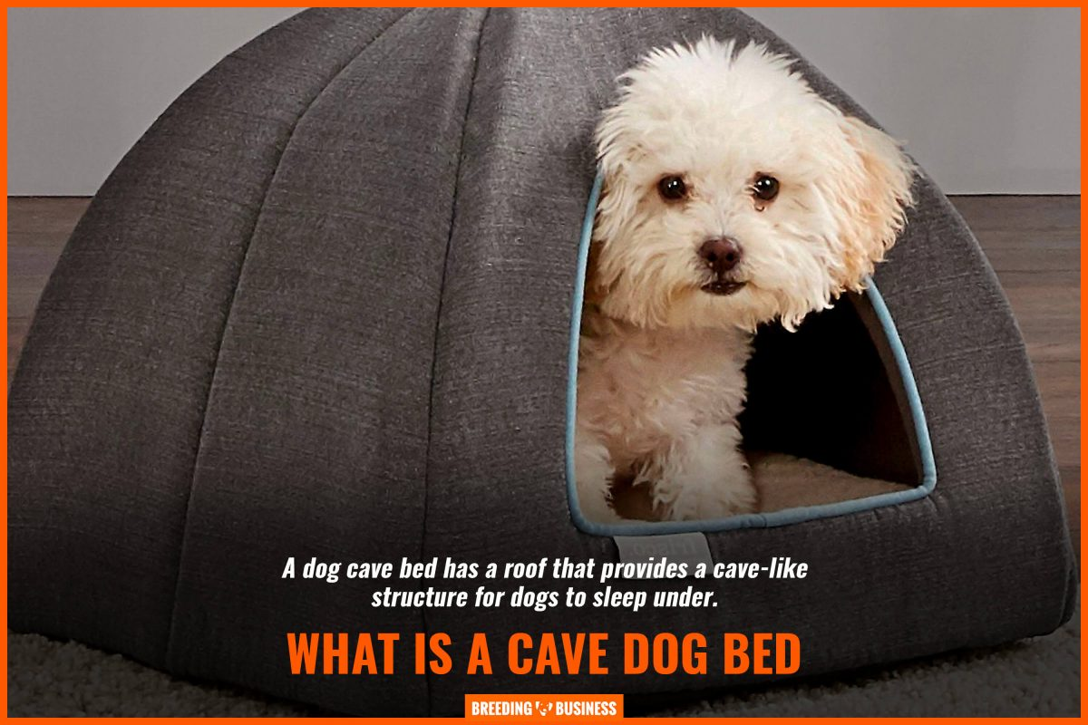 Picture of: 10 Best Cave Dog Beds Cozy Material Size Reviews Faqs