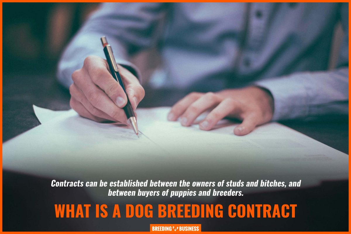 what is a dog breeding contract