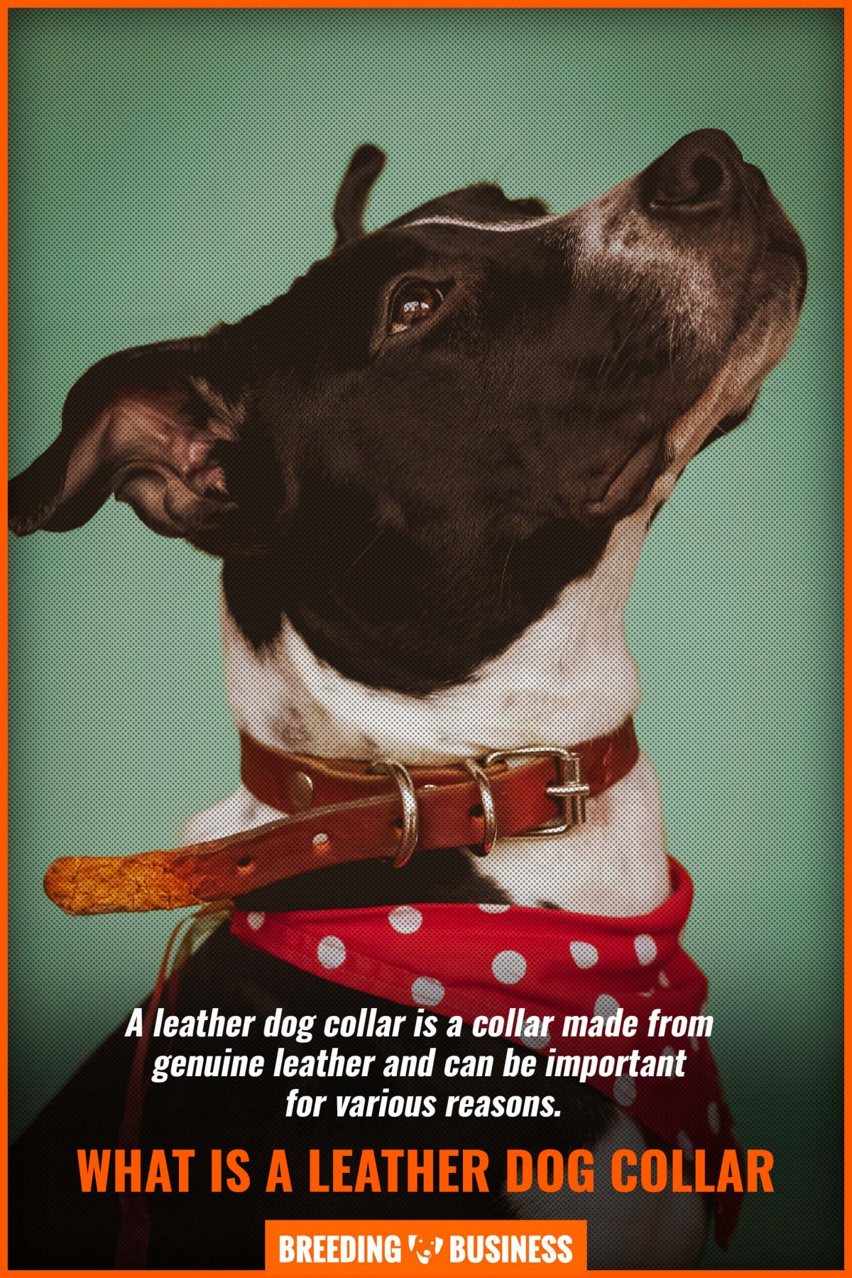 what is a leather dog collar
