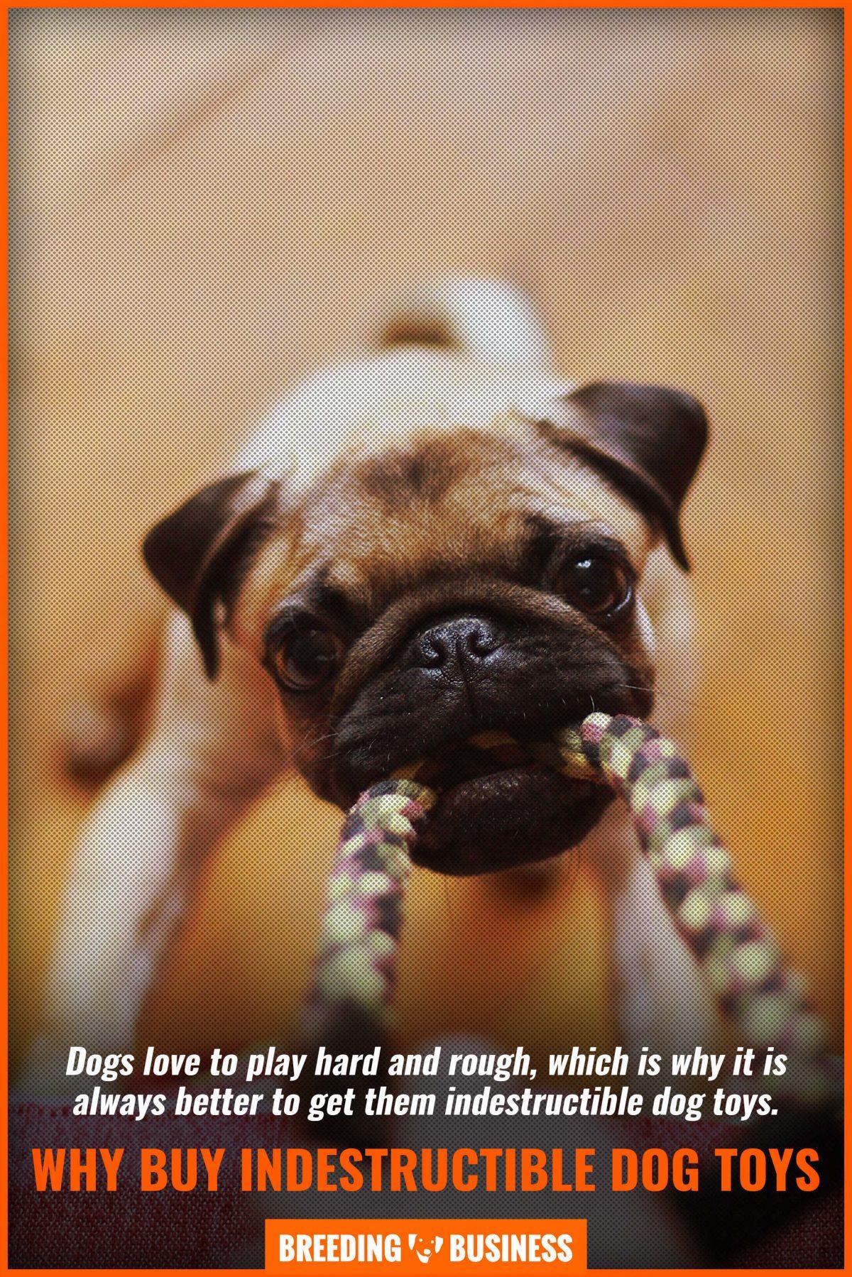 why buy indestructible dog toys