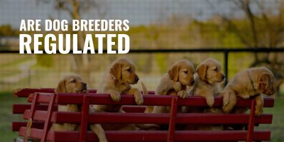 are dog breeders regulated