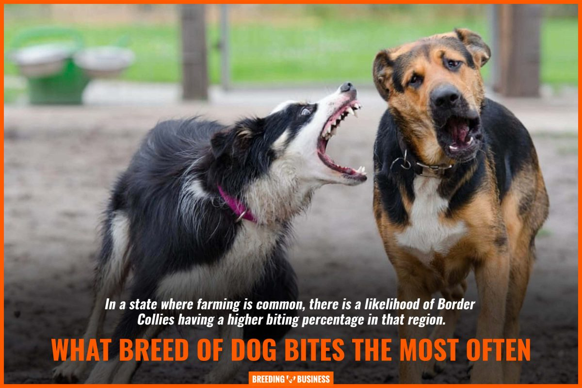 breed of dog bites the most often