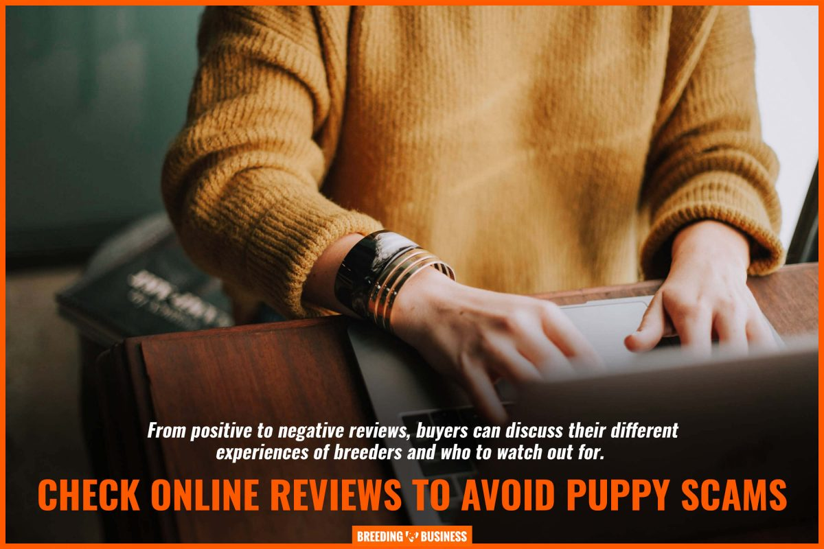 check online reviews to avoid puppy scams