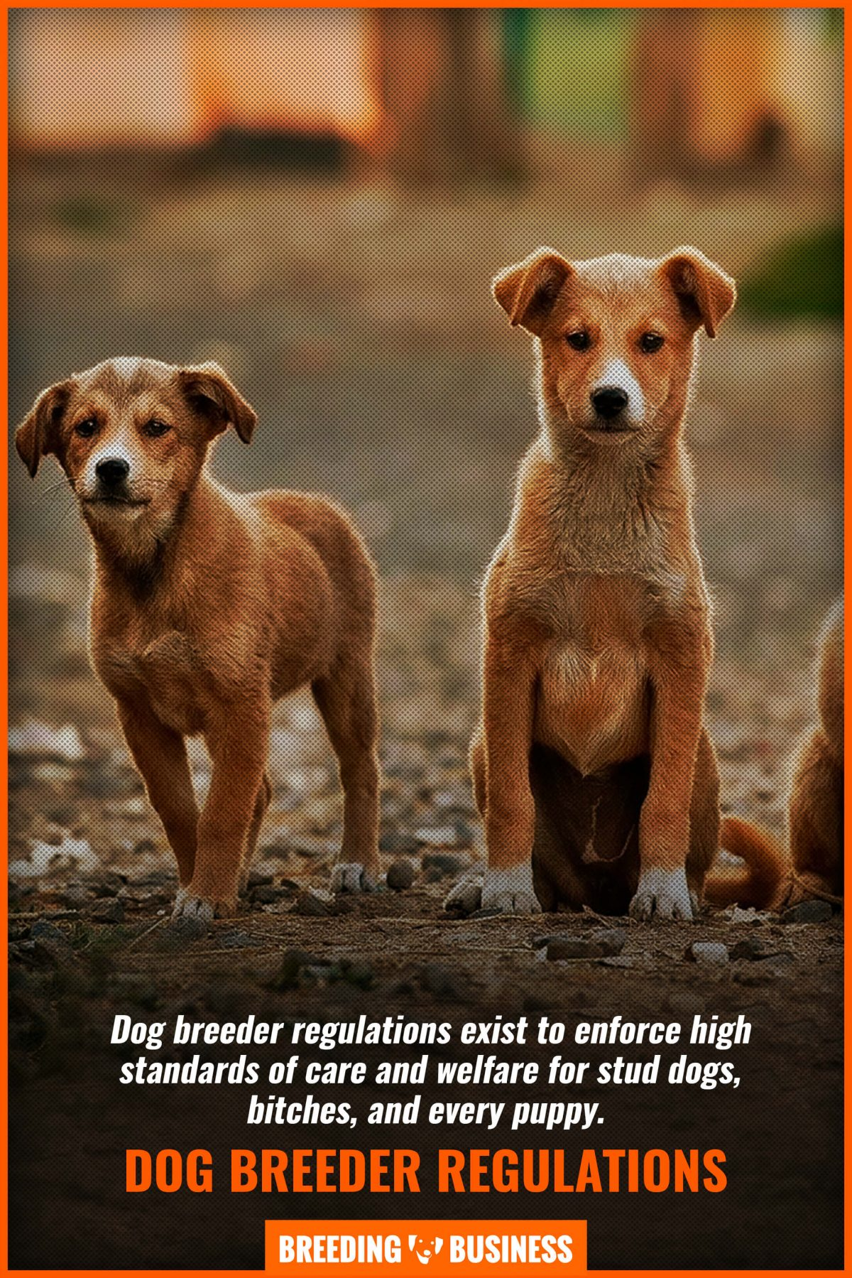 dog breeder regulations