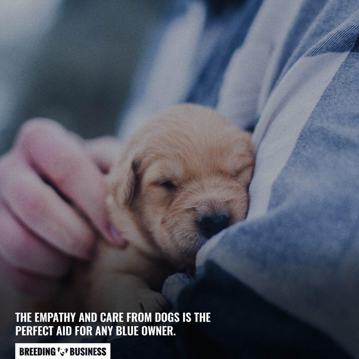 dogs comfort us