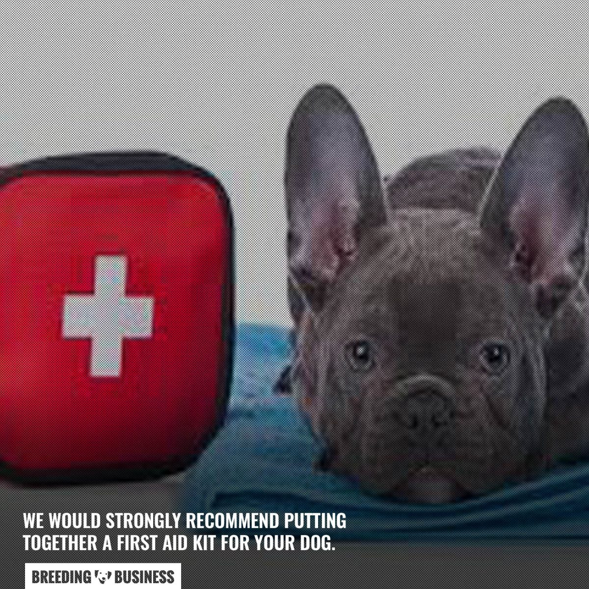 first aid kit for a dog