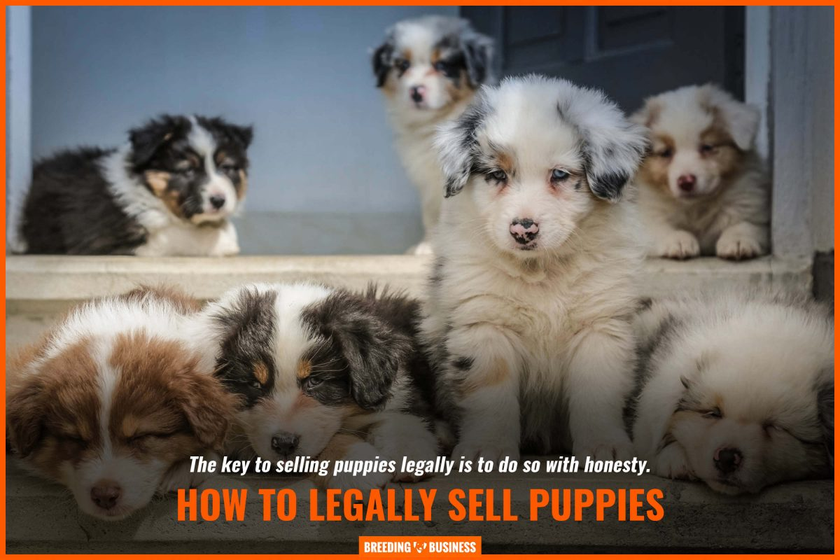 how to legally sell puppies