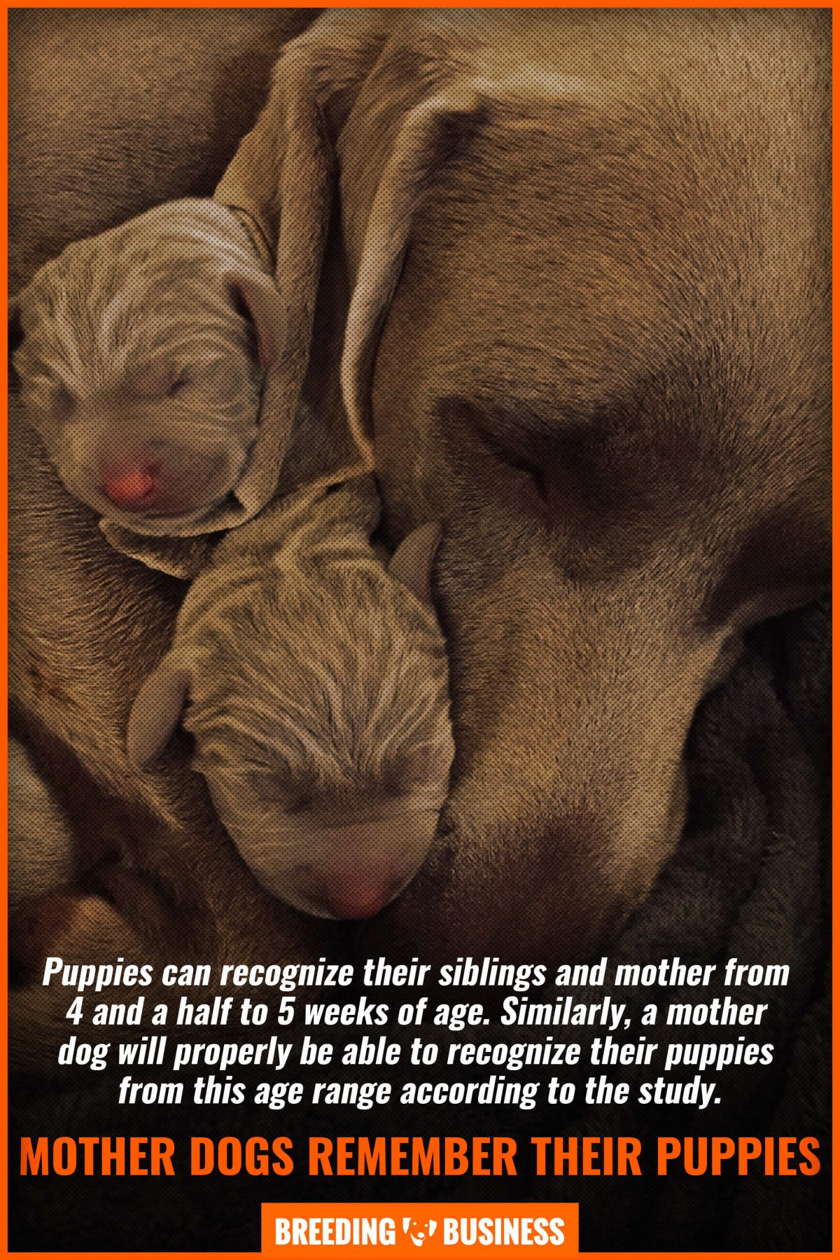mother dogs remember their puppies