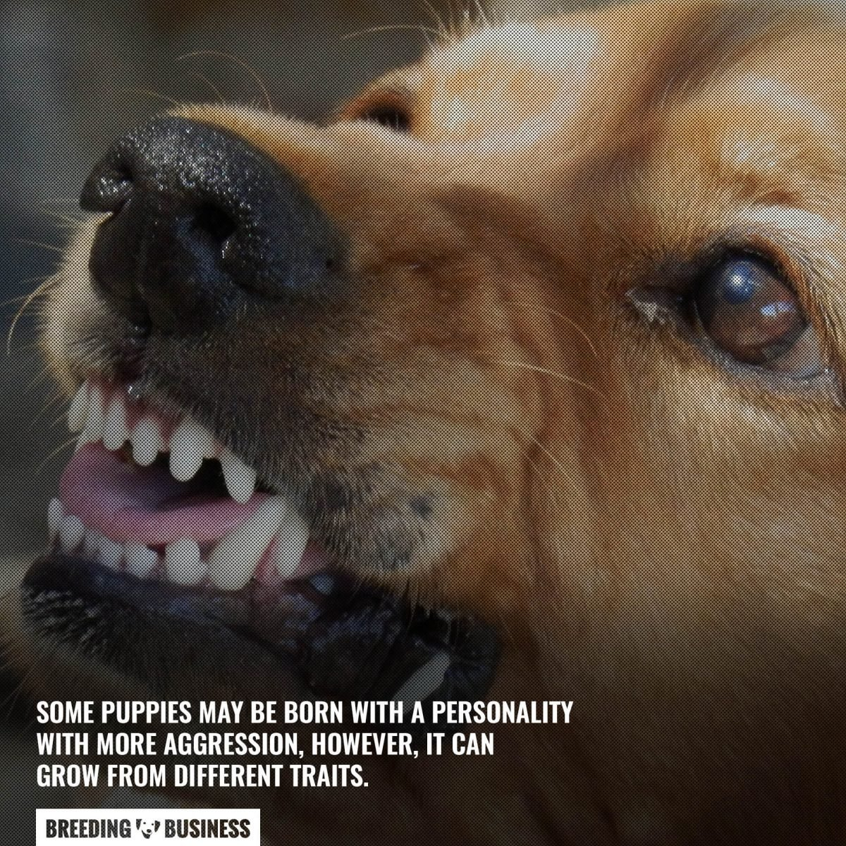 personality traits of the dog