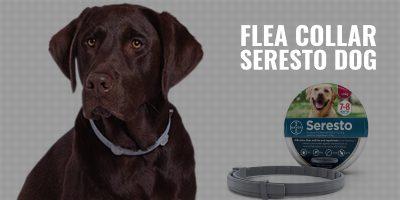 Seresto Dog Flea Collar – Review, Ingredients, Pros & Cons