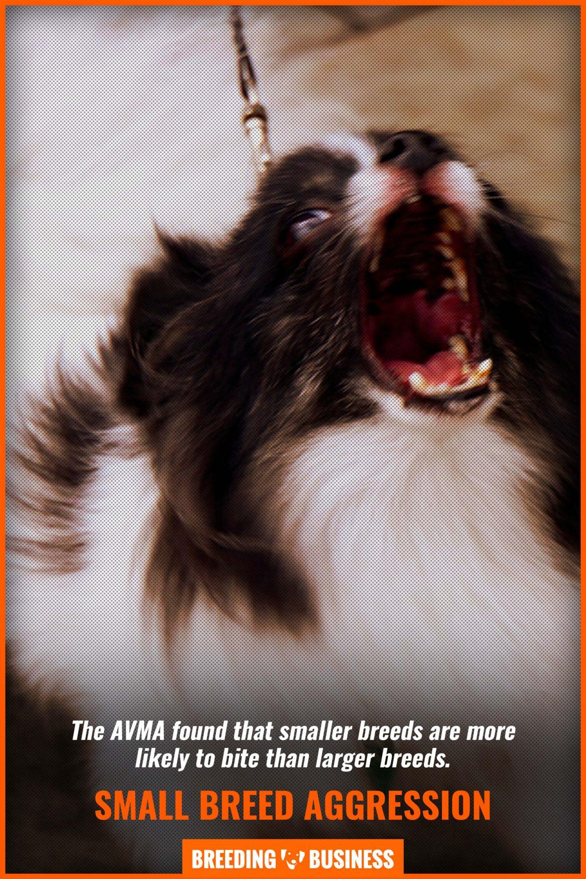 small breed aggression