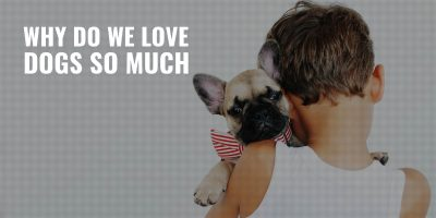 why do we love dogs so much