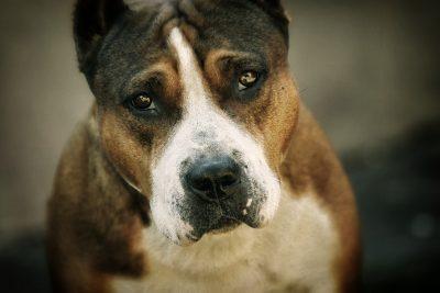 Badass Dog Names – Over 150 Badass Names For Tough Puppies!