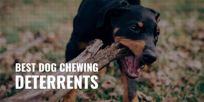best dog chewing deterrents
