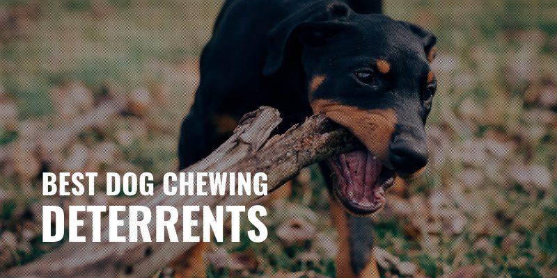 best dog chewing deterrents