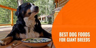 best dog foods for giant breeds