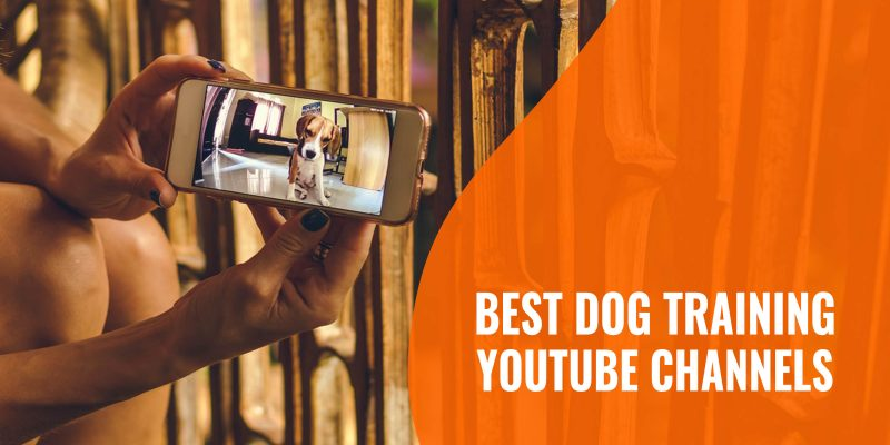 best dog training youtube channels