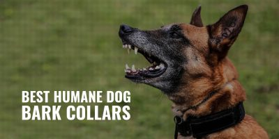 best humane dog bark collars