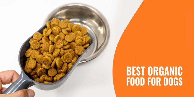 best organic food for dogs