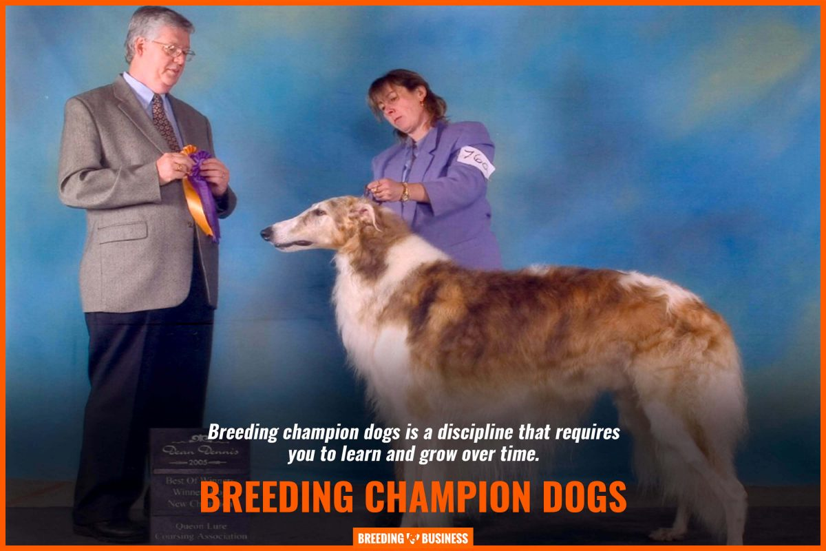 breeding champion dogs