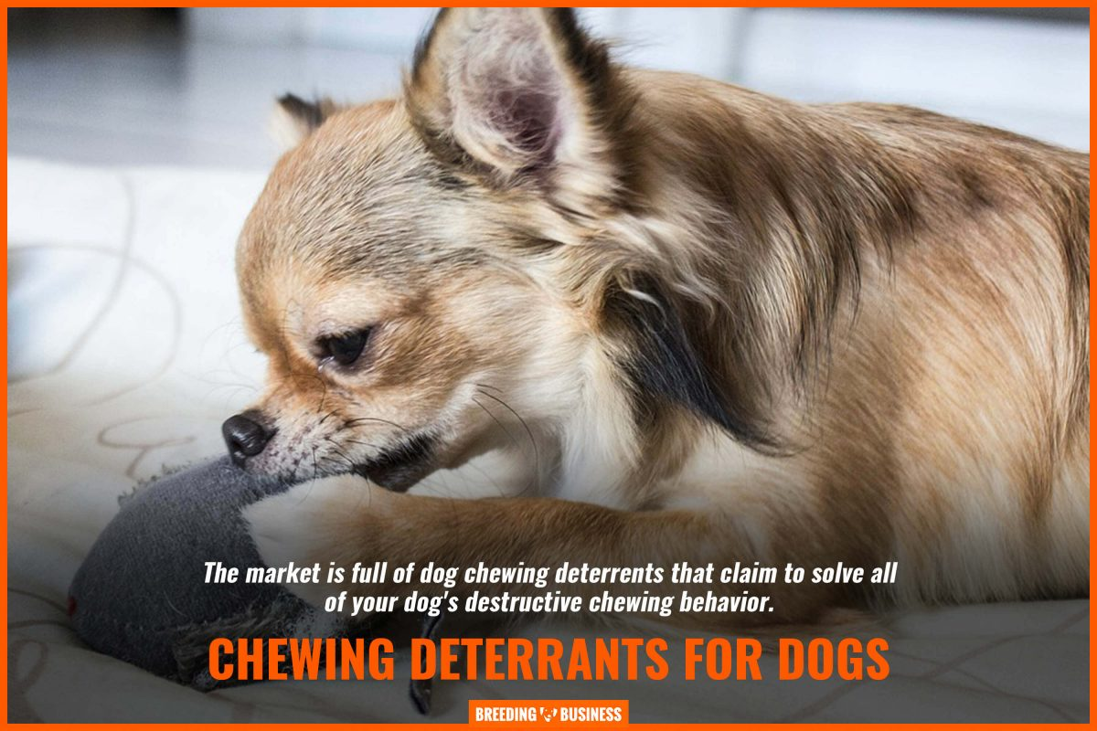 chewing deterrents for dogs